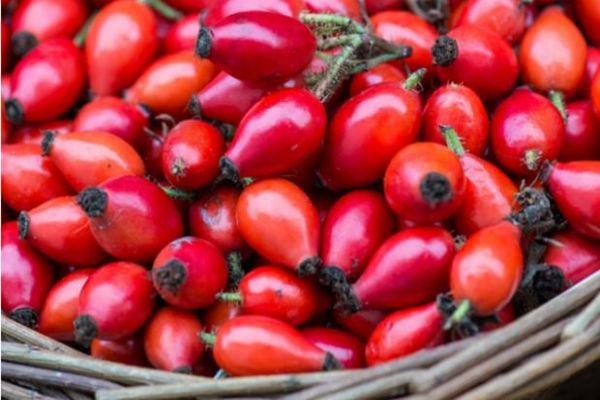Kako Uzimati Koprive Tijekom Menstruacije  Tamponi June